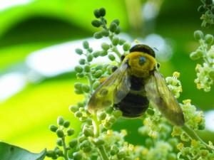 Bi på blomma by pippalou